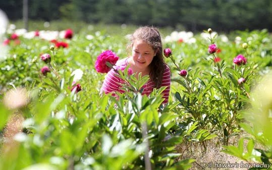 Taylin Myburgh, 12, Wanganui - commercial garden, Trenrose Paeonies and Garden, SH50, Tikokino, part of the Tikokino District Gardens event photograph