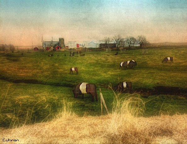 ...till the cows come home © Cyndy Johnson