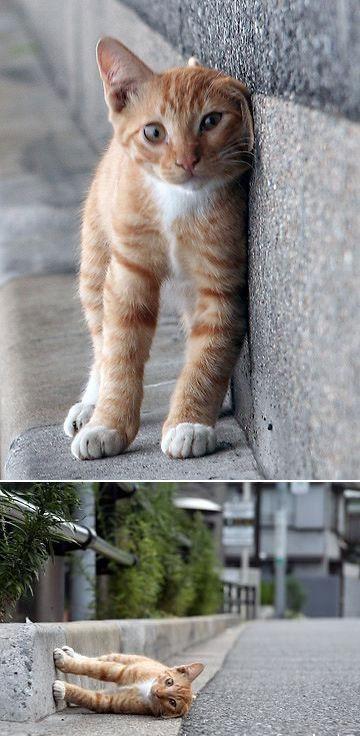 Sliding Cat