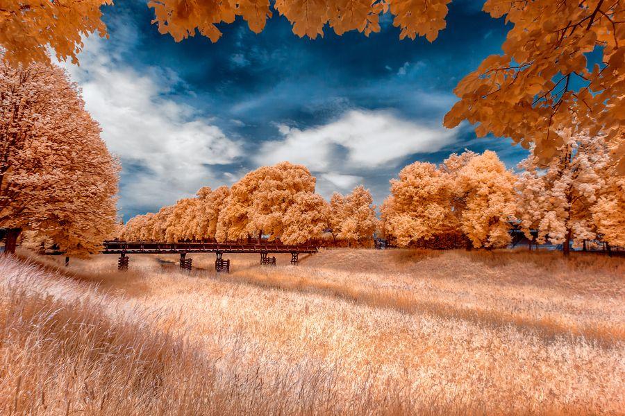 11. The bridge by Thorsten Scheel