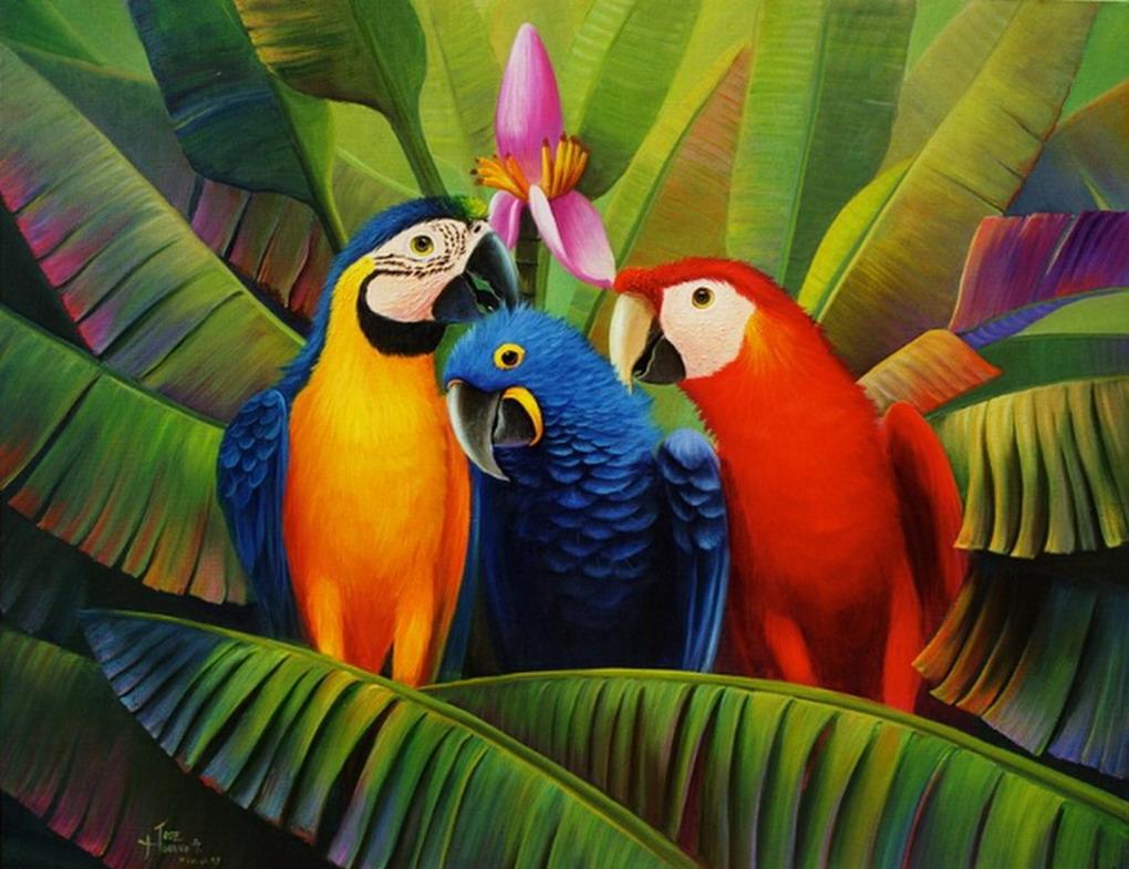 Pintura moderna y fotograf a art stica lindas guacamayas - Color y pintura ...