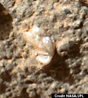 Mars Flower (Edt 300 px)