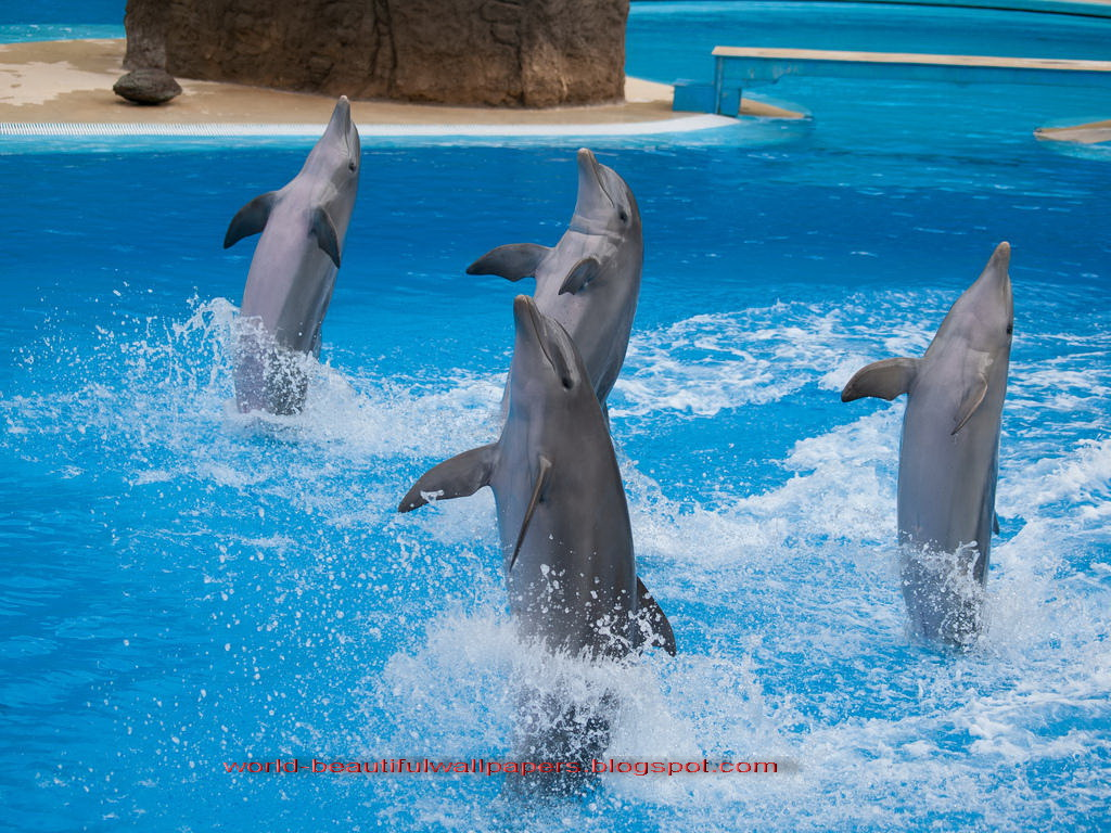 dolphin lesbian singles Gay dolphins: researchers in australia recently observed big groups of dolphins engaging in what appears to be homosexual behavior.