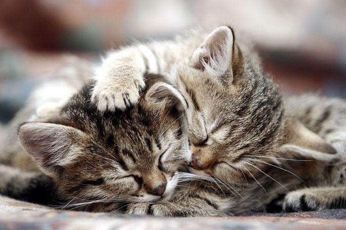 Voici deux chatons qui se font des câlins. Je fonds totalement.