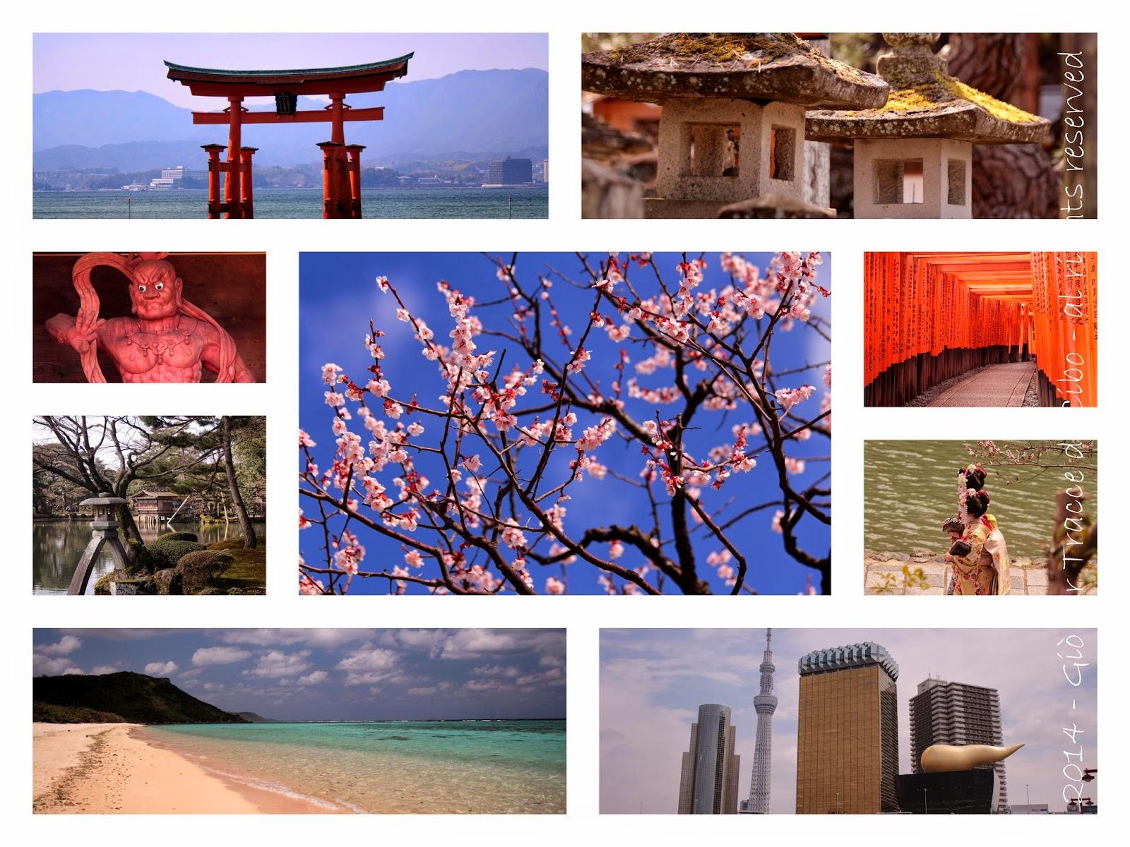 Giappone, fioritura dei ciliegi