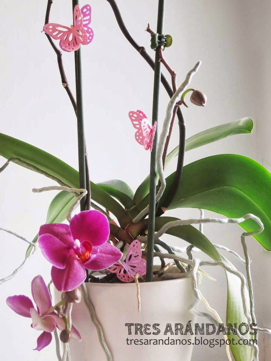 orquideas y mariposas