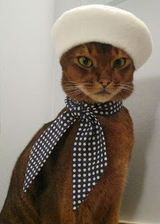 Orange cat wearing a beret