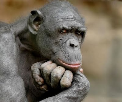 Cerita Dan Foto Lucu Monyet Yang Lucu