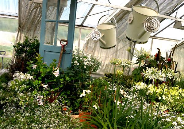 Vita blommor i Tyresö handelsträdgård
