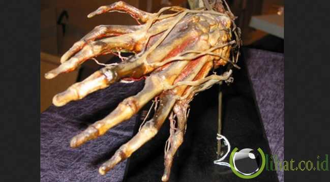 Anatomi Jari Tangan