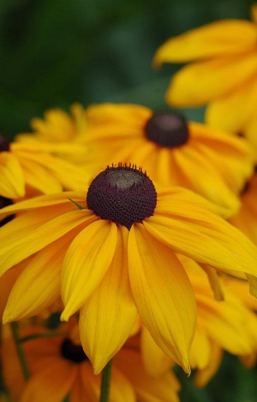 Πανέφορφα λουλούδια