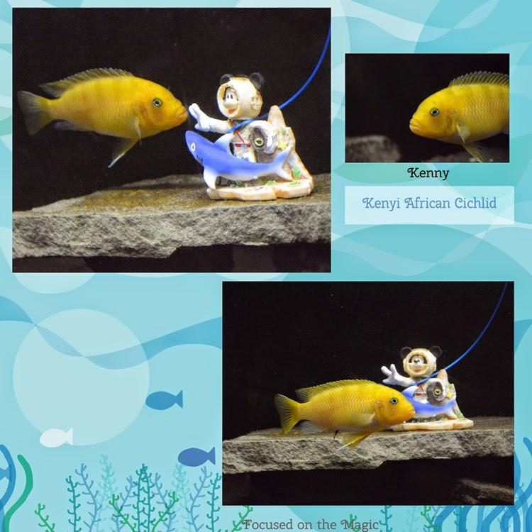 PetSmart Disney Ornaments African Cichlid