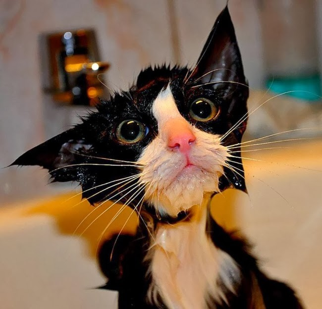 15 hilarious photos Of wet cats