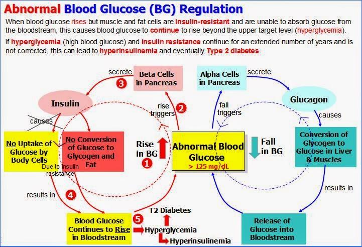 Abnormal Blood Glucose Regulation