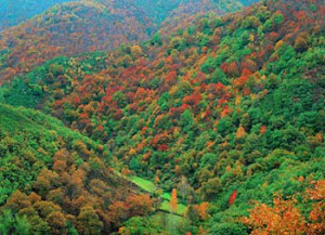 Bosques autoctocnos