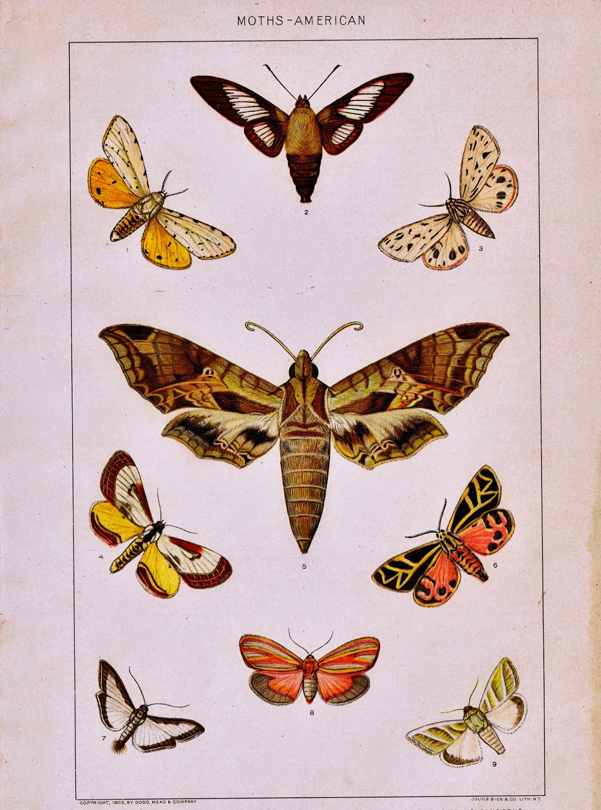 Antique Nature Printable Moths via KnickofTimeInteriors.blogspot.com