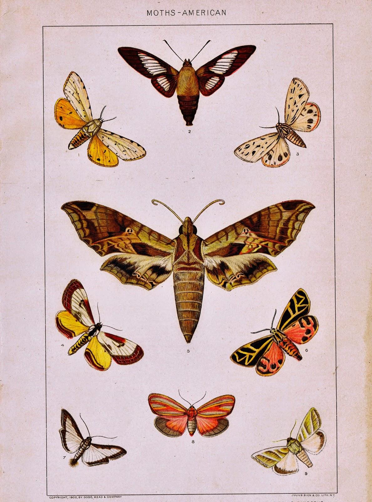 Antique Nature Printable Moths via KnickofTimeInteriors.blogspot.com