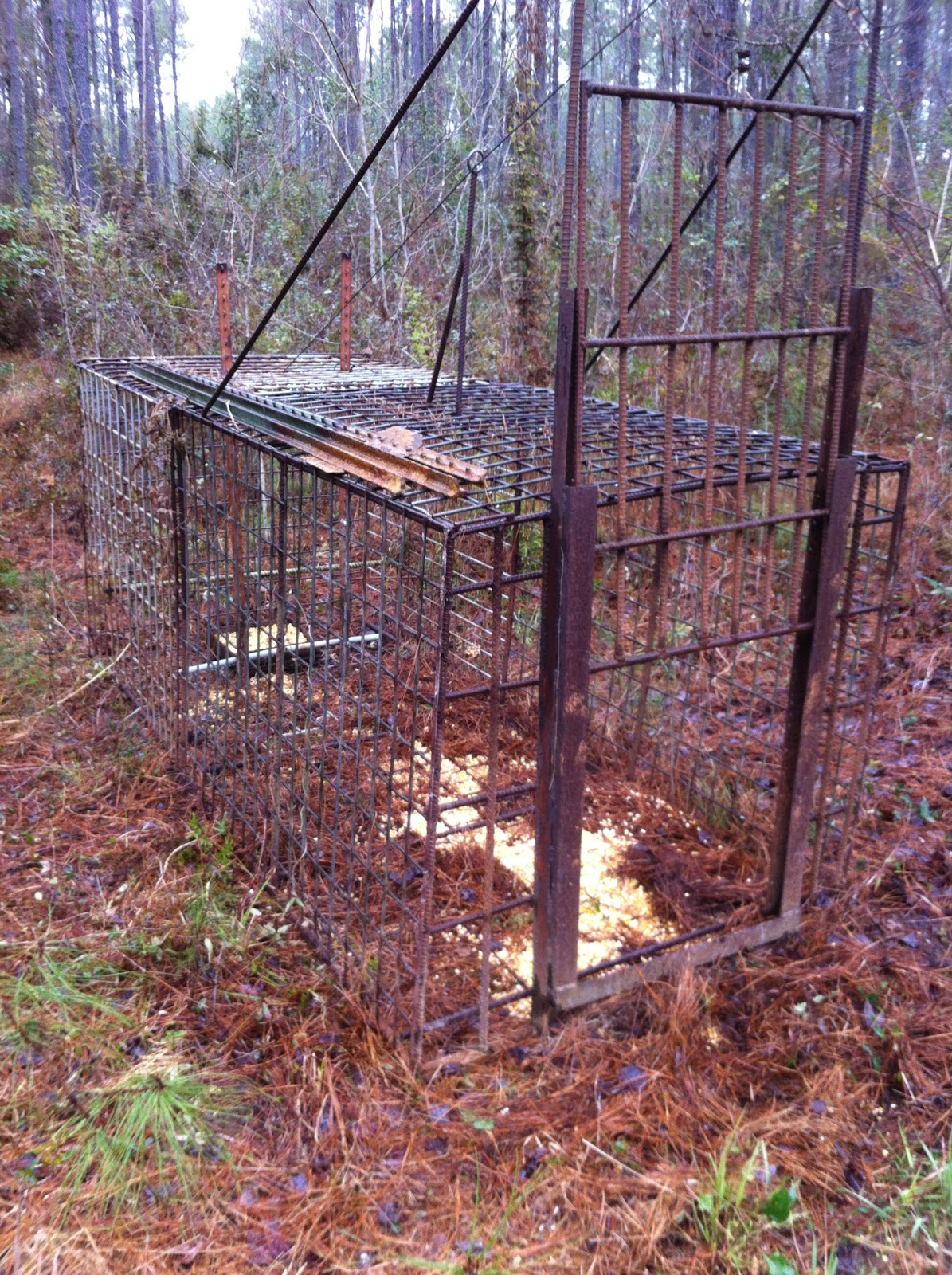 I want to build a hog trap advice please. - Georgia Outdoor News Forum