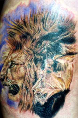 lion head tattoos. In the animal kingdom lions