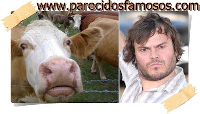 Jack Black con vaca