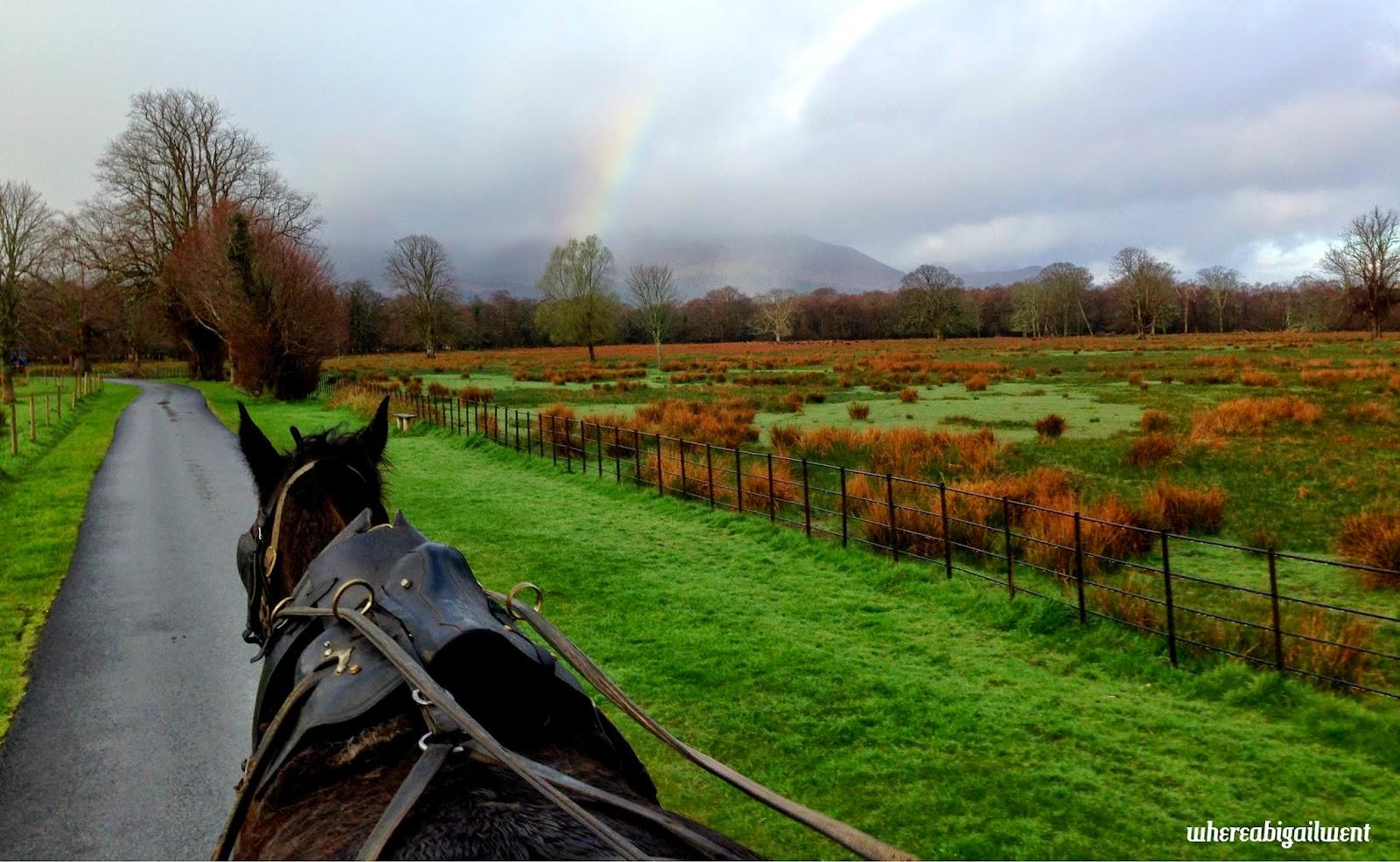 Jaunting through Killarney National Park