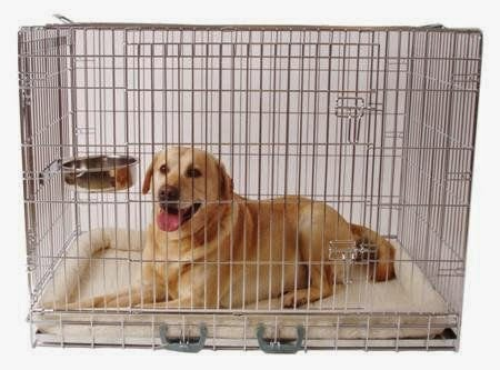 bench kopen hond 2