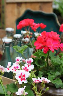 Trädgårdsbloggar uppdelat i växtzoner