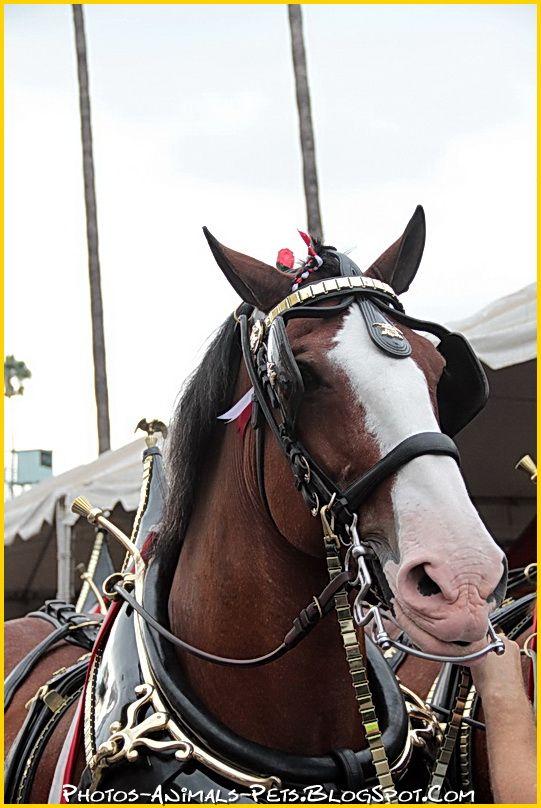http://4.bp.blogspot.com/-8NZmhO_sBmc/Ttzwlj4XzKI/AAAAAAAACcU/a83LaIHJJ5A/s1600/horses%2B.jpg