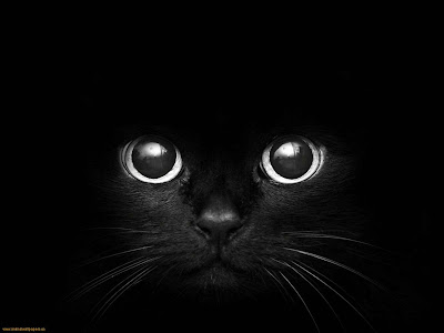 Cat Eyes Black Cats Eyes Wallpaper