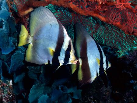 gambar bawah laut, dalam laut