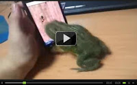 Frog Vs iPhone | Funny frog playing iPhone game