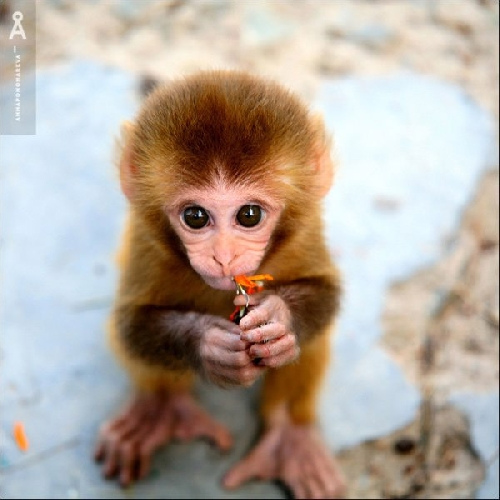 Really cute monkeys pictures - photo#4