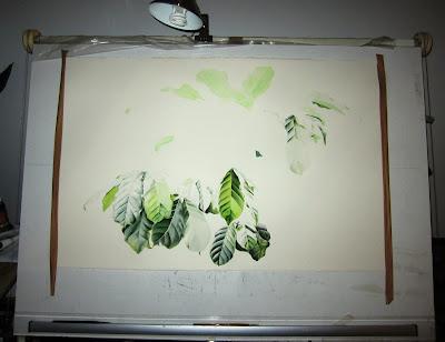 Coffee arabica painting in progress