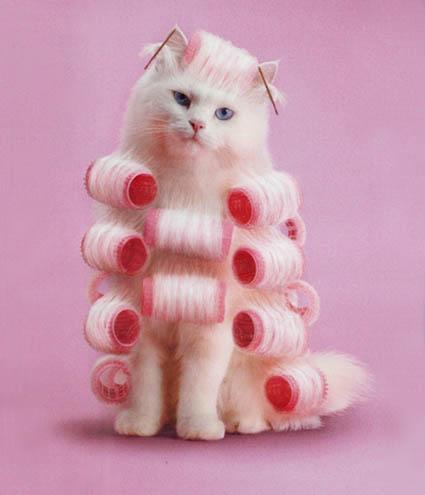 geile chat massage met happy