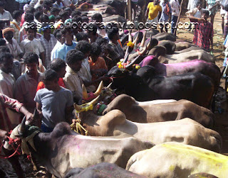 Jallikattu Kaalai Line up