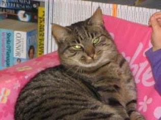 Setahun lebih menghilang ternyata kucing ini pulang ke rumah lamanya yang berjarak 3000 km