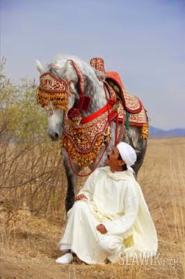 الحصان الأمازيغي البربري