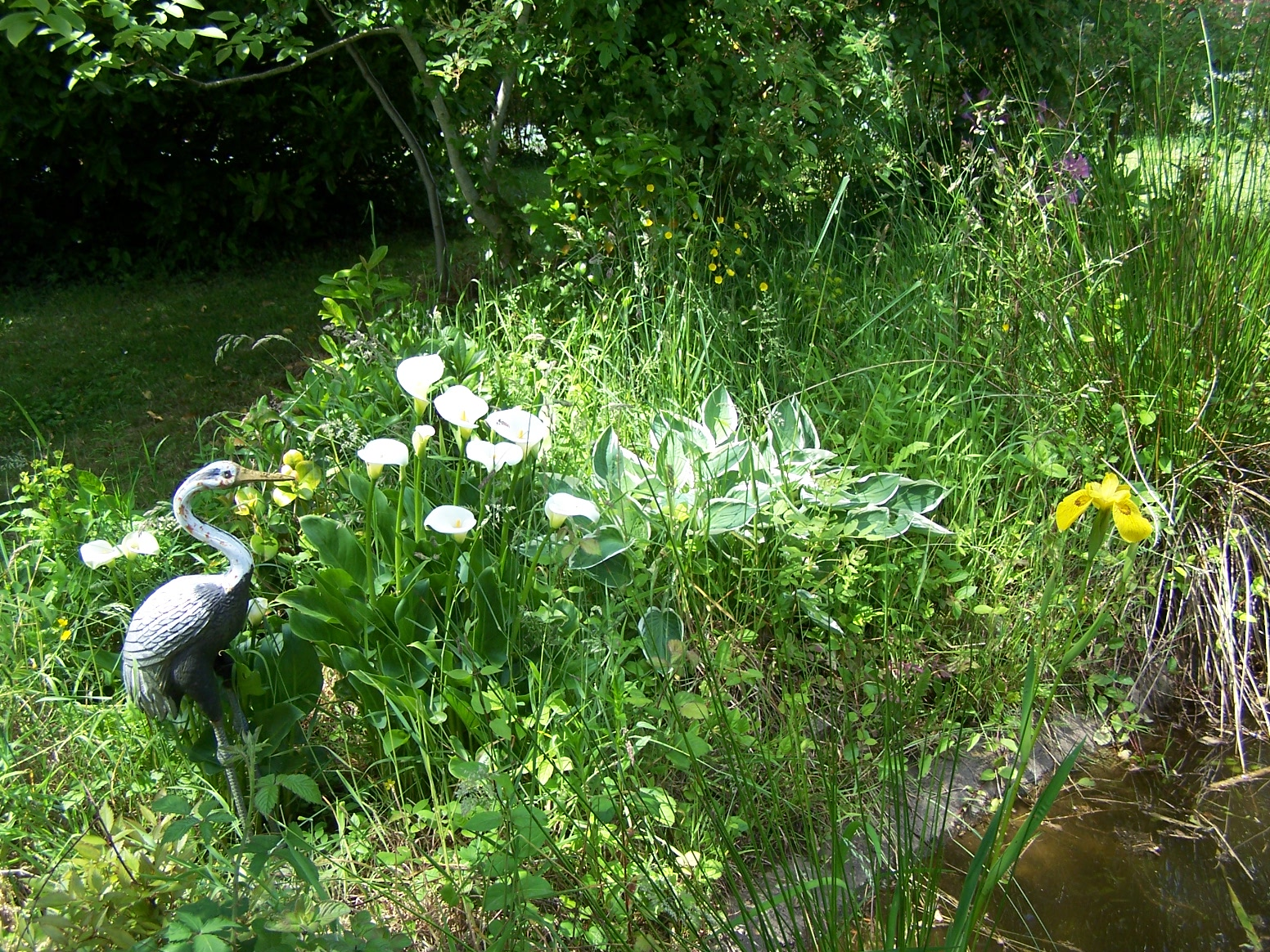 Bienvenue dans mon jardin a fill sur sarthe sur le for Le jardin aux 100 secrets