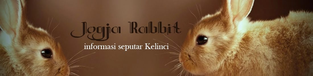 Jogja Rabbit