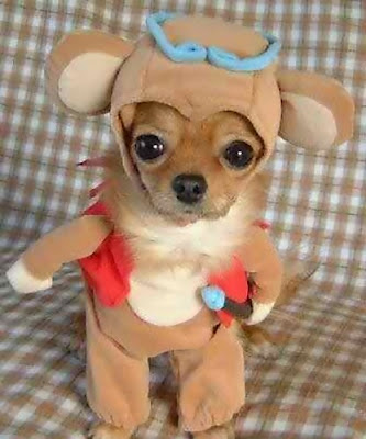 12 Creative and Unusual Dog Costumes (12) 5