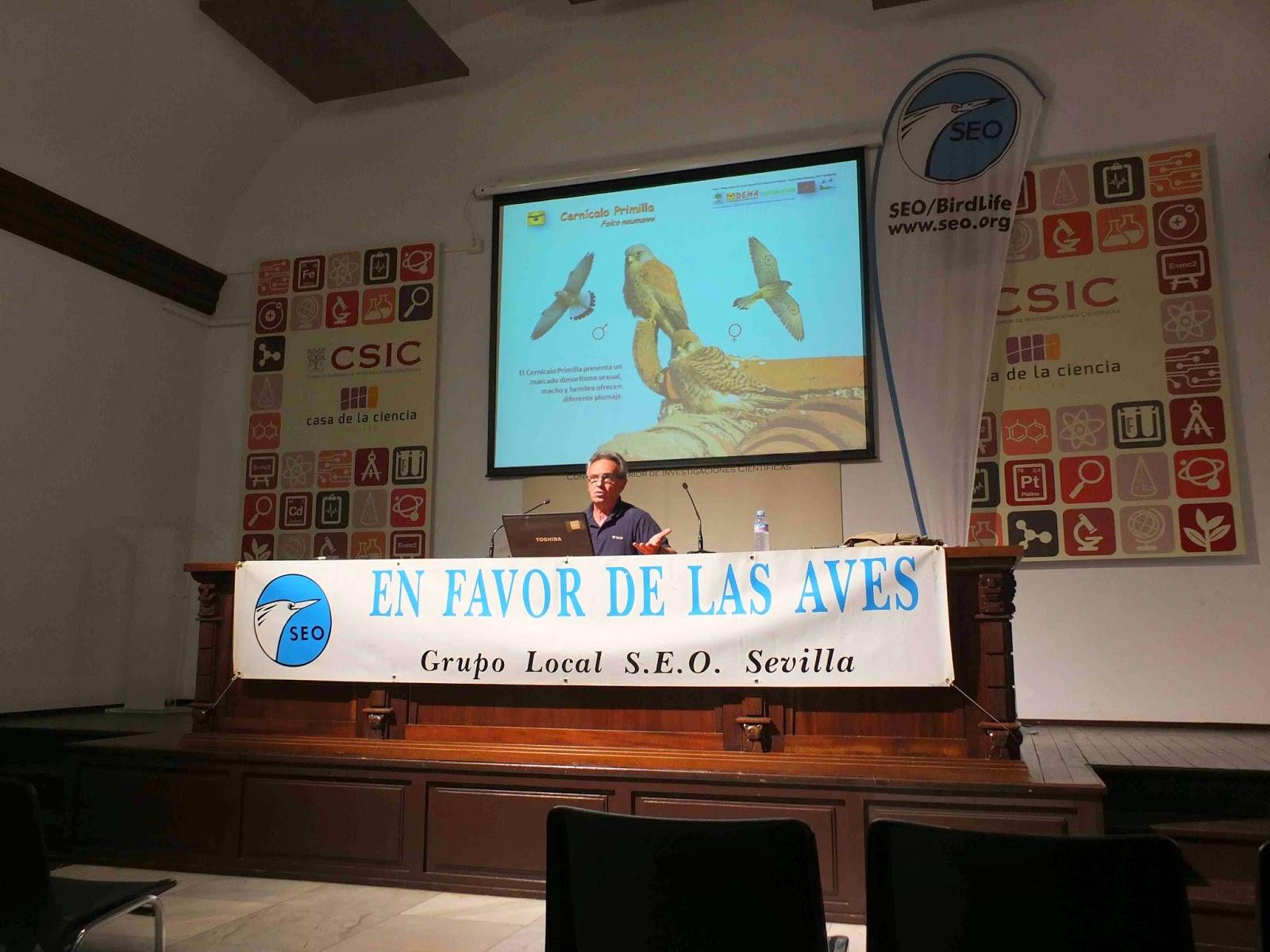 """Conferencia """"Cernícalos, iglesias y catedrales"""". Por José Antolín (Presidente DEMA), en el ciclo Martes Ornitológicos que el Grupo Local SEO-Sevilla organiza en el museo Casa de la Ciencia de Sevilla"""