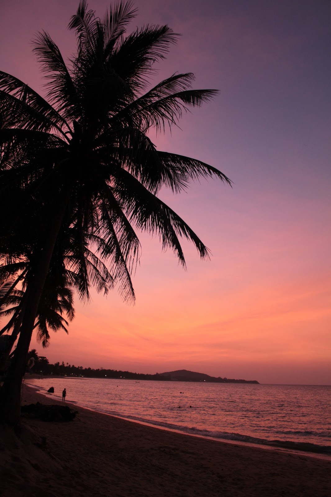 Palm Tree Sunset by Cherry May Ward Photography