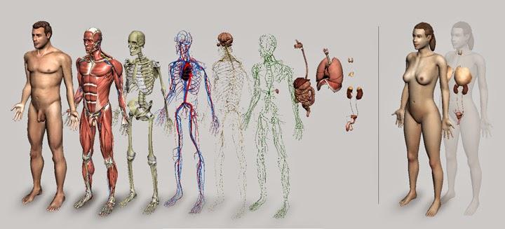 Introducción a la Fisiología Humana | CourseField