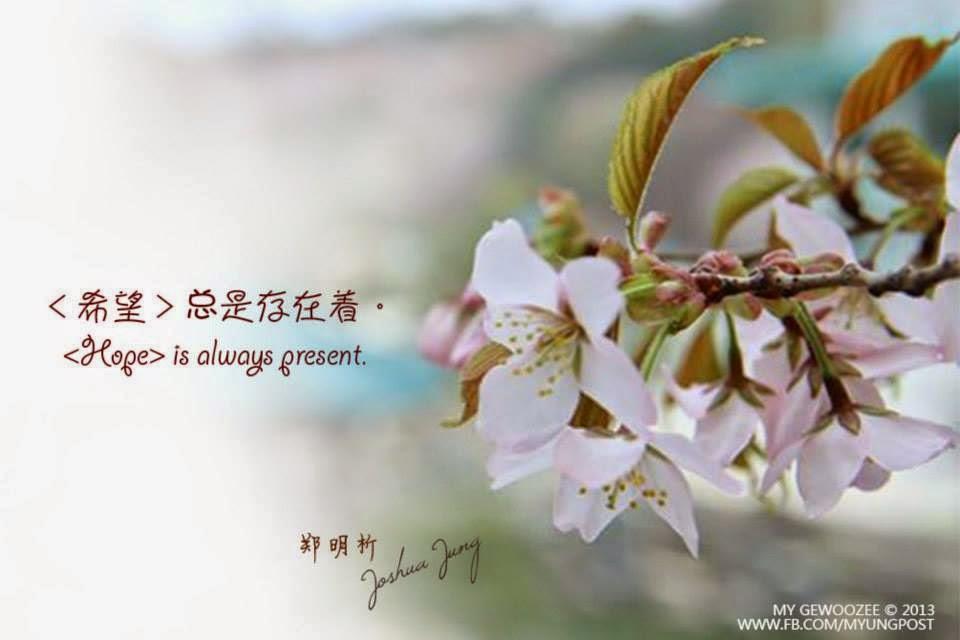 郑明析,摄理,月明洞,花,希望,Joshua Jung, Providence, Hope, Flower, Wolmyeong Dong