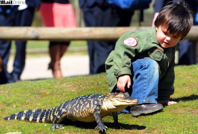 Charlie Parker, de apenas 3 anos de idade, ao lado de um aligátor em reserva animal de sua família