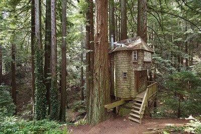 shingled tree house, tree house, fairytale cottage in woods, cabin shingled