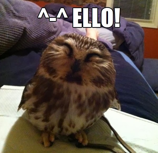30 Funny animal captions - part 18 (30 pics), cute owl pic meme, ello