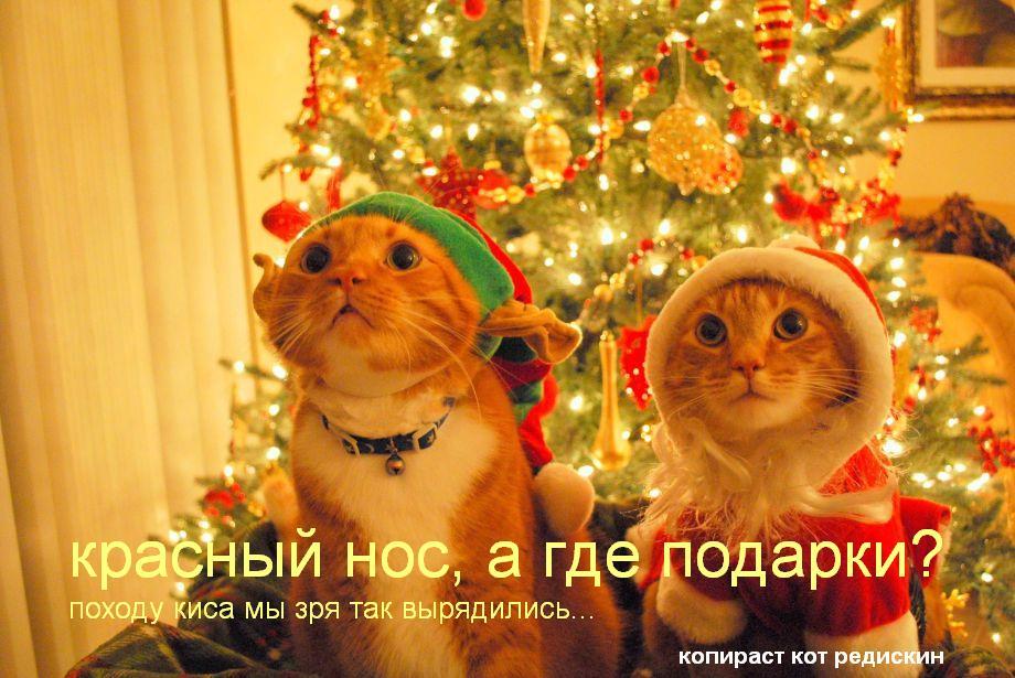 Коты и кошки новый год: Красный нос, а где подарки? Походу киса мы зря так вырядились
