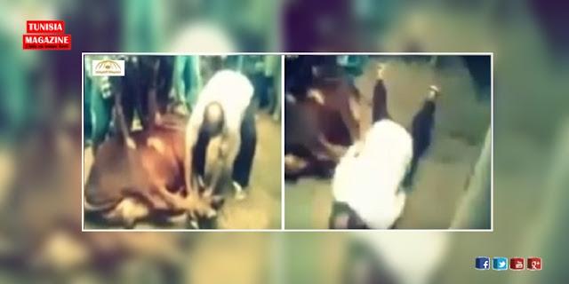 بالفيديو: لحظة وفاة جزار اثناء ذبح عجل