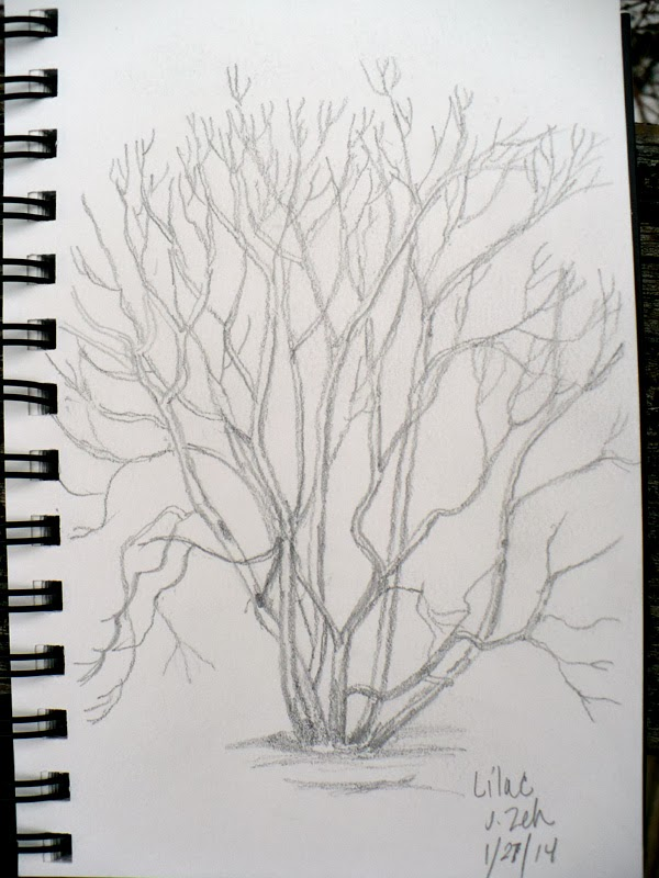 Lilac bush in winter pencil sketch